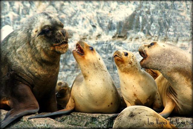 Isla-de-Lobos-Ushuaia