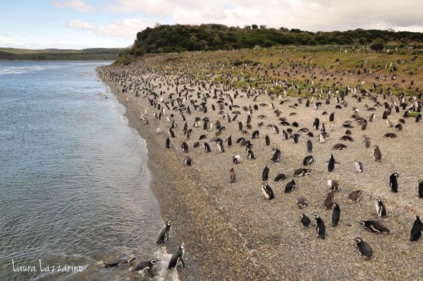 La pingüinera es uno de los motivos para viajar a Ushuaia