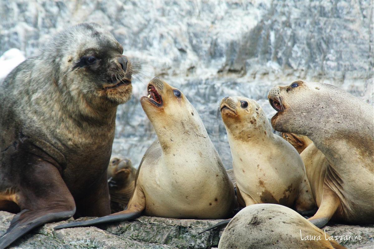 lobos en el Canal de Beagle, vistos en un viaje a Ushuaia