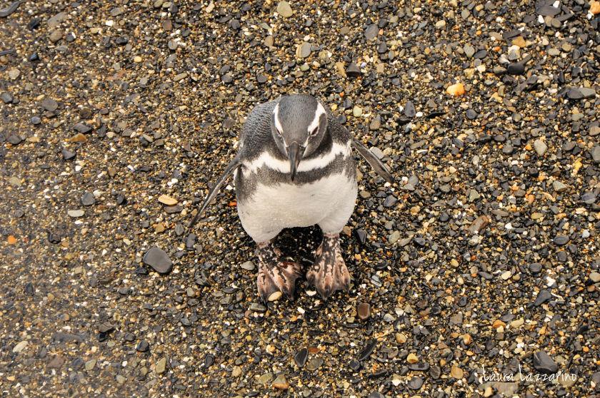 Viajar a Ushuaia permite ver pingüinos muy de cerca