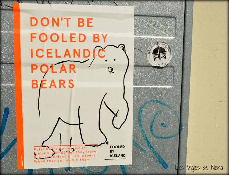 icelandic polar bears