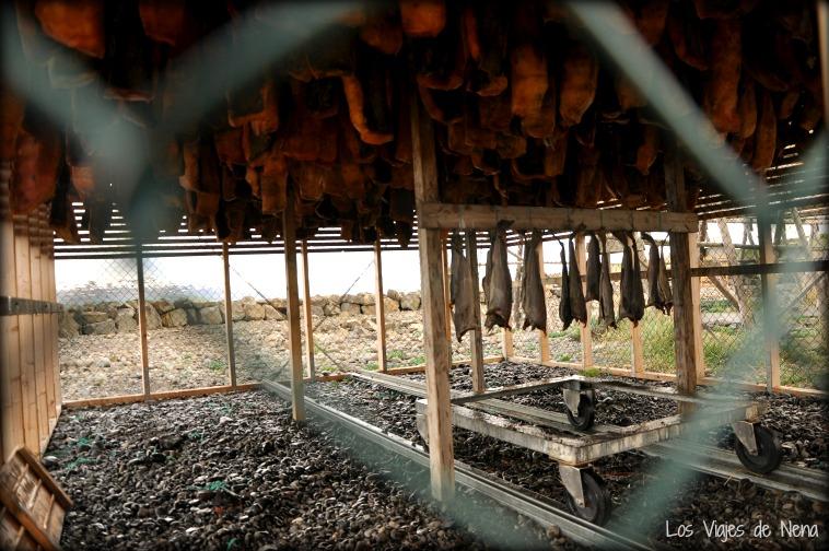Carne de tiburón, otro plato típico de Islandia.