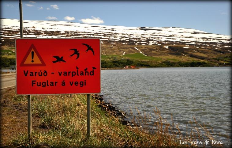 viajar de mochilero a islandia 2