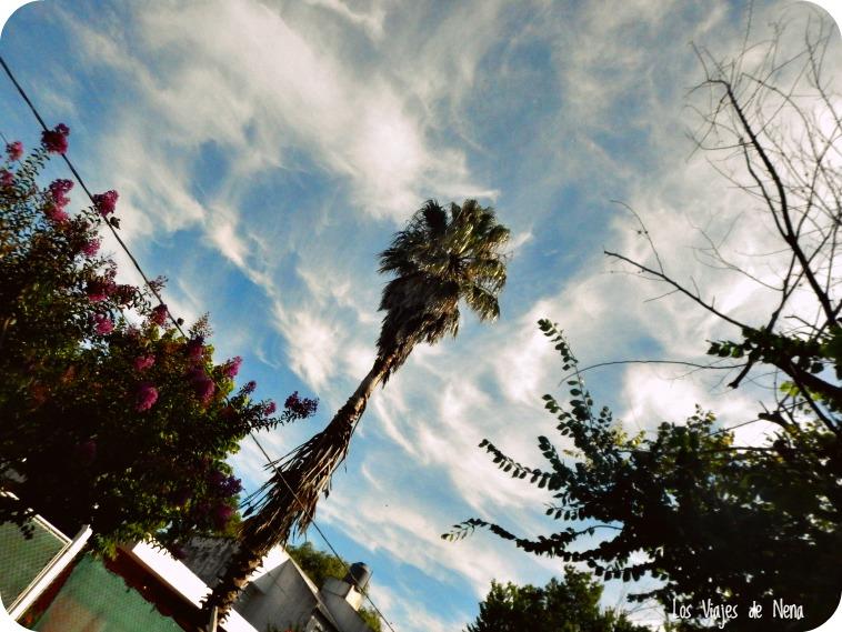 palmeras domesticas