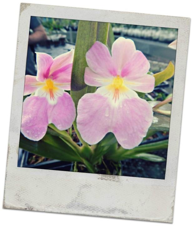 orquideas parque arvi