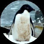 antartida_menu