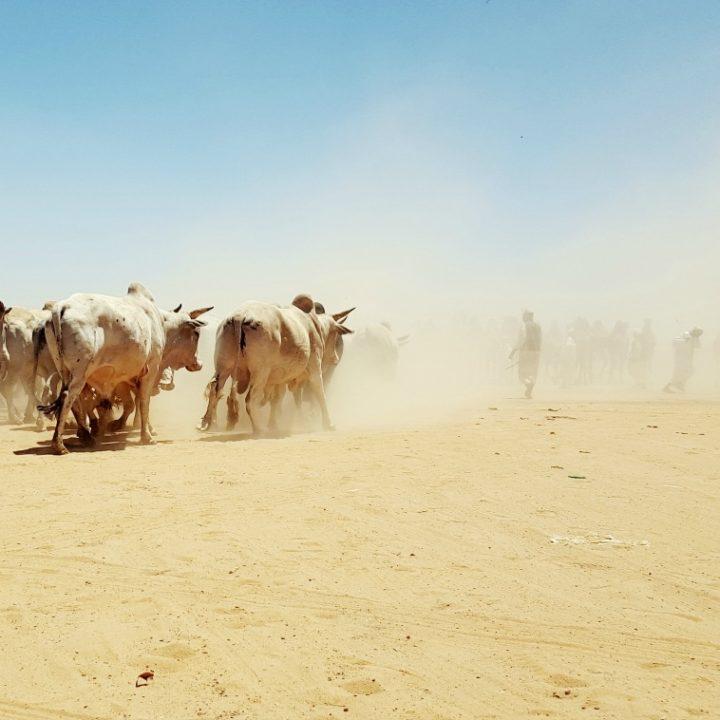 que-ver-en-sudan28