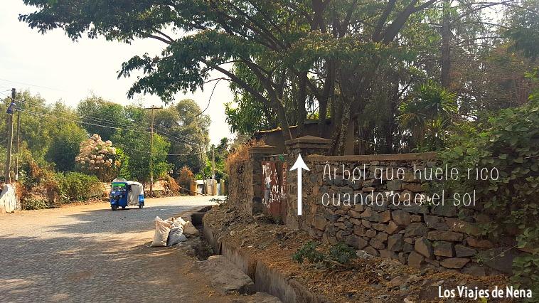 visitar-gondar7
