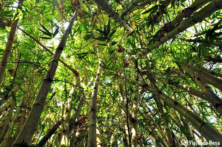 El techo de la ducha de bambú...