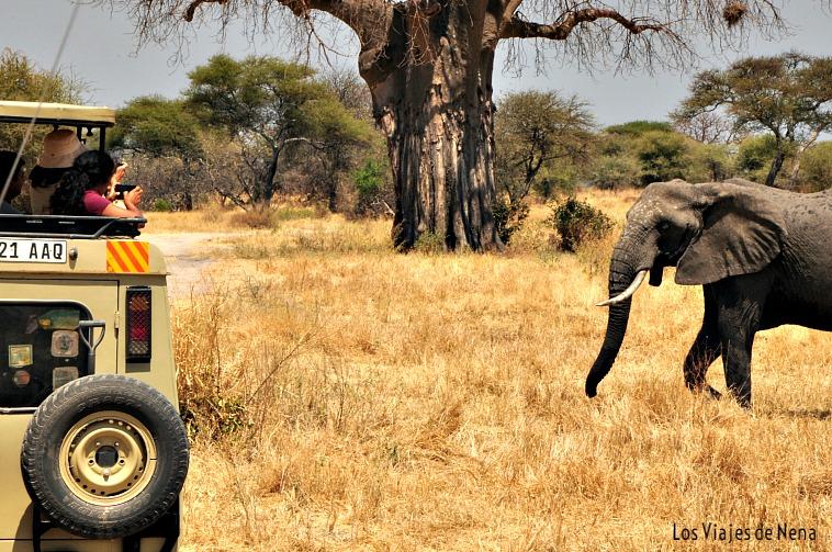 safari en tanzania tarangire