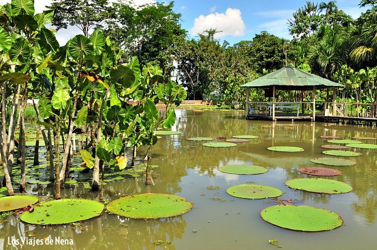 mirador del fundo pedrito en Iquitos