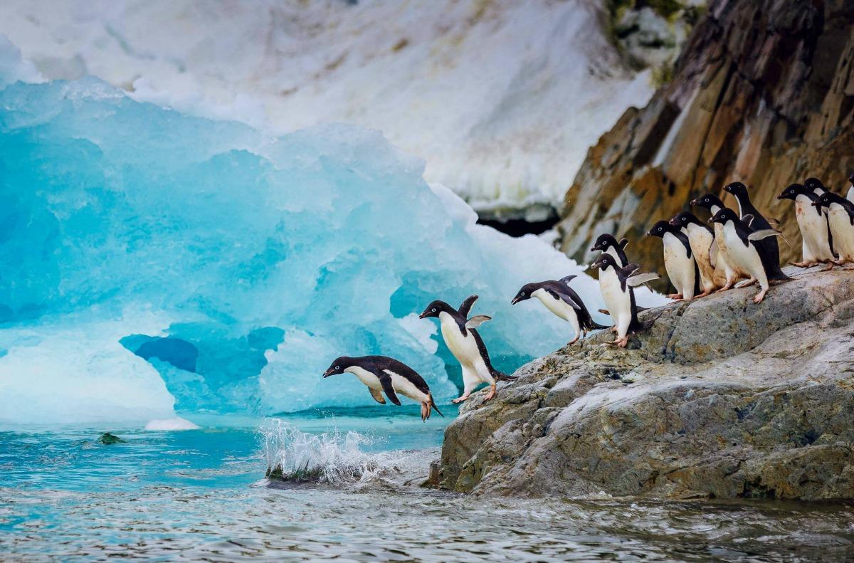 Pingüinos saltando al agua en Antártida.