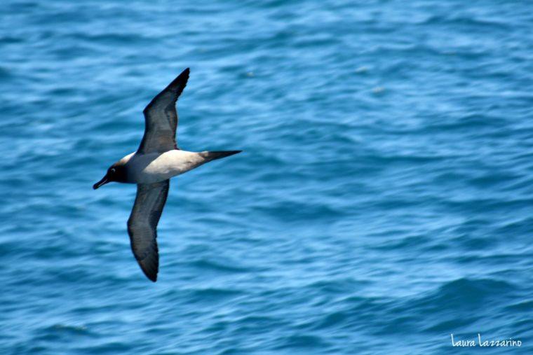 La fauna que empezamos a ver a horas de desembarbar en las Islas Shetland del Sur