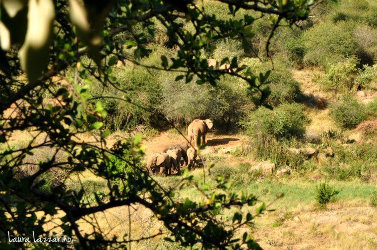 Así veíamos los elefantes desde el baño e nuestro glamping el primero de los alojamientos alternativos en donde dormí, en Kenia.